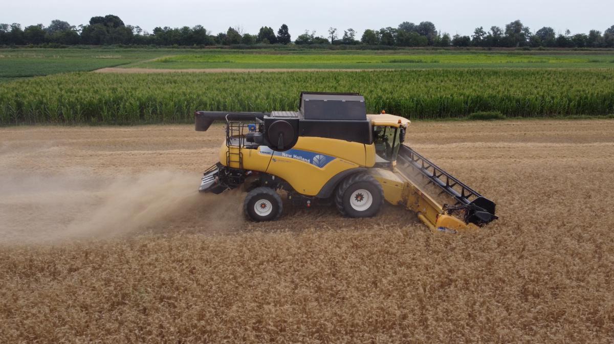 Il grano antico, la tradizione del futuro
