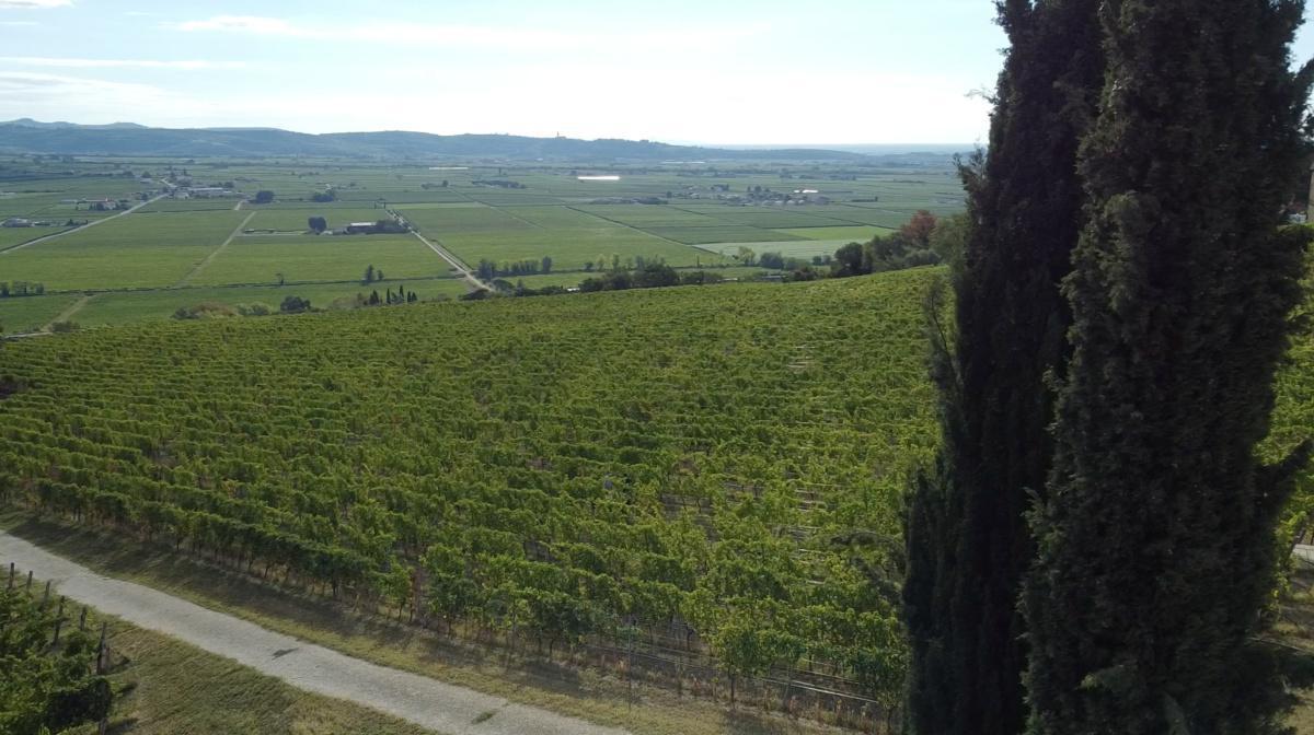 Roccolo Grassi, il Vino a... Trazione elettrica!