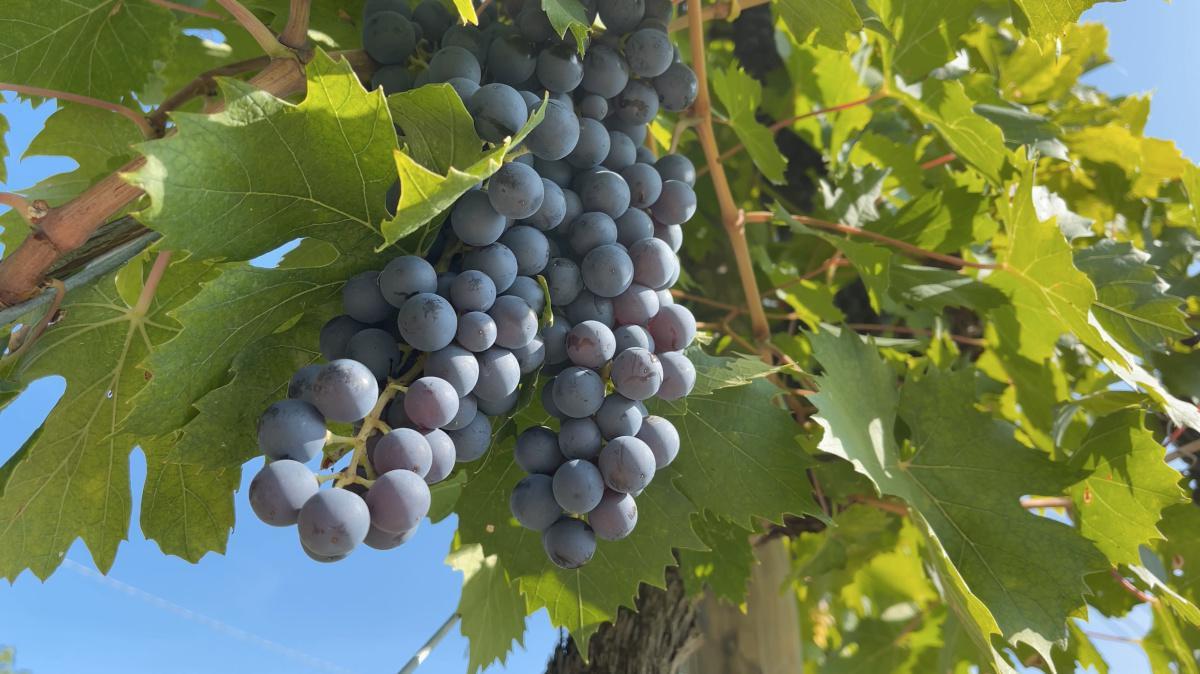 Cà La Bionda, il Vino fatto con le Mani
