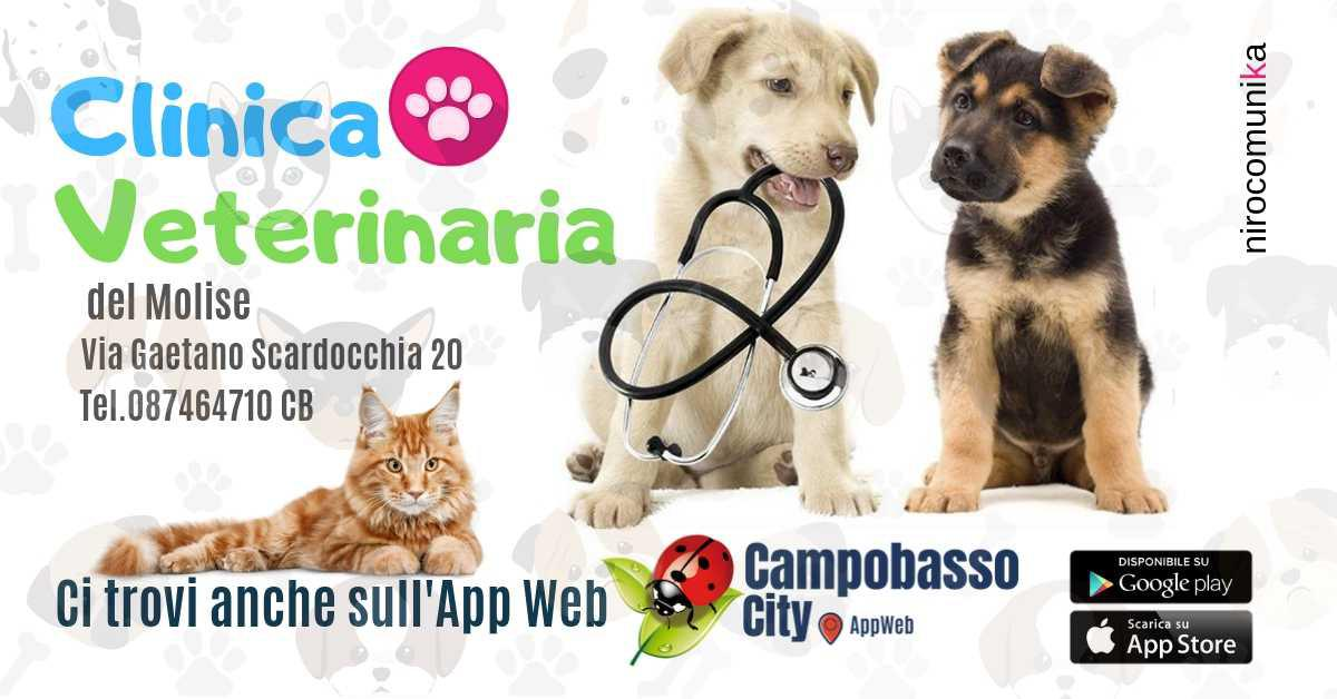 Clinica Veterinaria del Molise