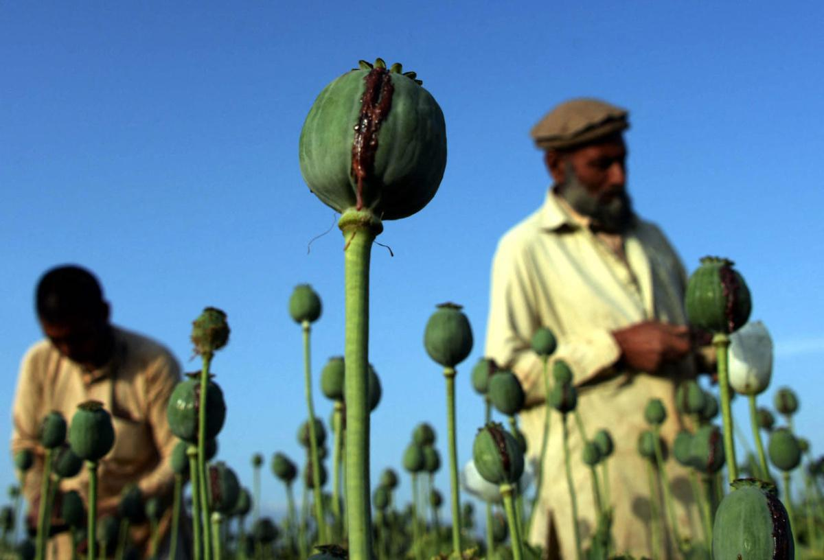 """روبرتو سافيانو: """"طالبان هم أولاً وقبل كل شيء مهربو مخدرات"""""""